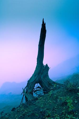 Tree Stump and Fog Along the Canyon Wall