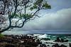 Wailua Shore Line #1