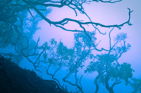 Trees in Fog at Waimea Canyon #1