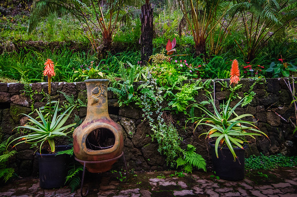 Garden at the Coffee Plantation