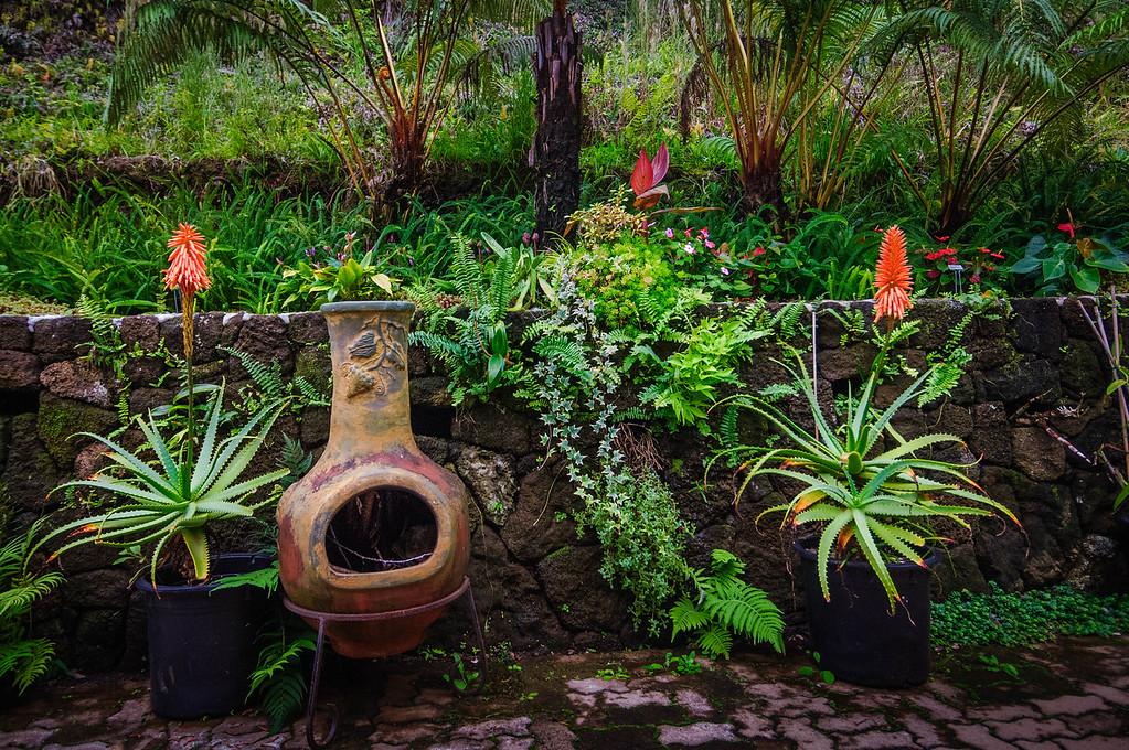 Garden at the Coffee Plantation