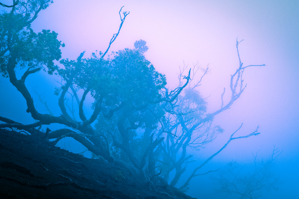 Trees in Fog at Waimea Canyon #2