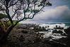 Wailua Shore Line #2