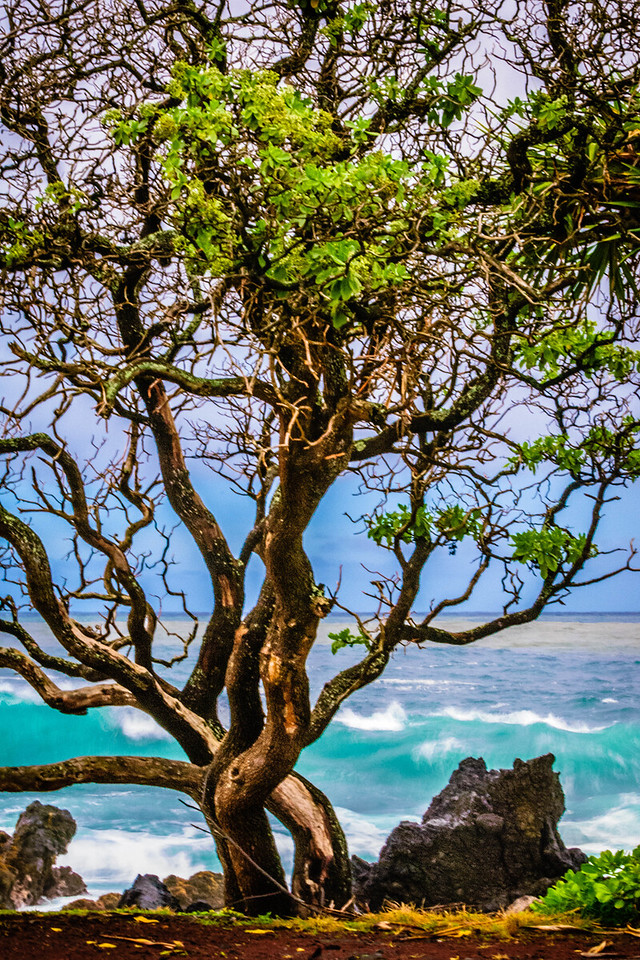 Tree at the Shore