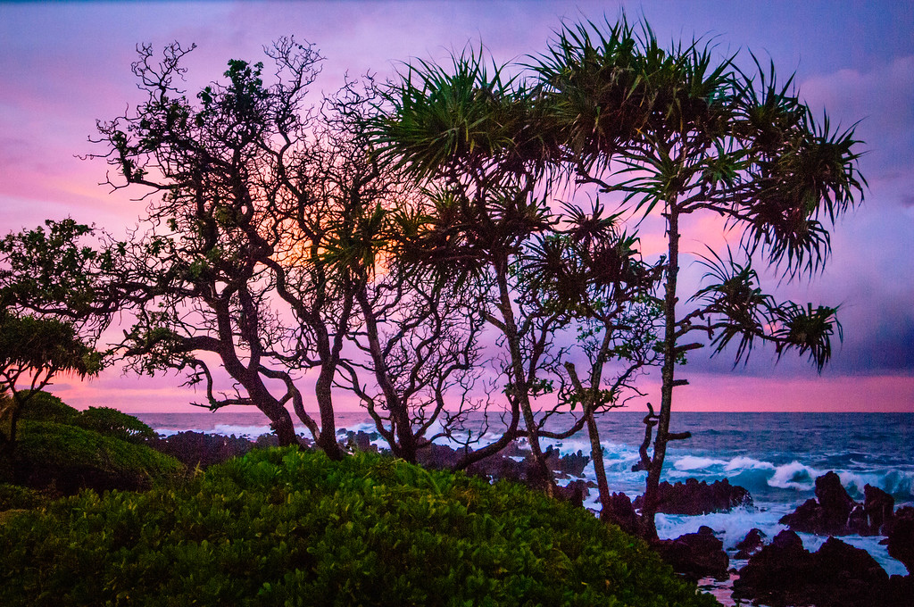 Silhouette of Trees at the Shore