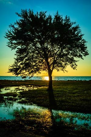 Tree Near the Bay