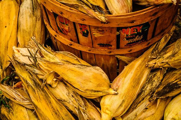 Harvested Corn #2