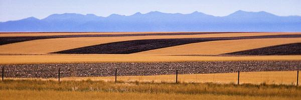 Wheat Field Pattern