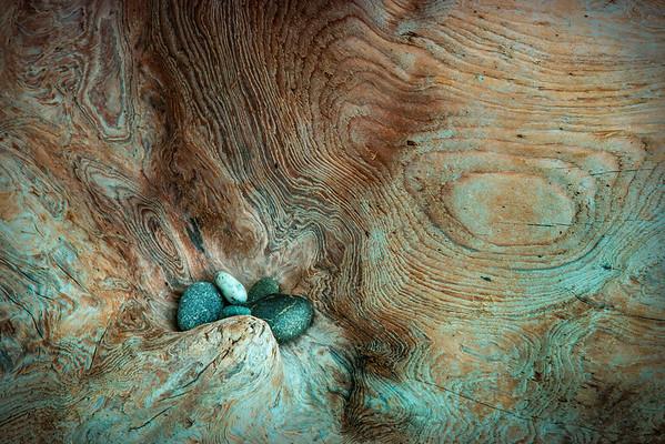 Pebbles on Dead Tree