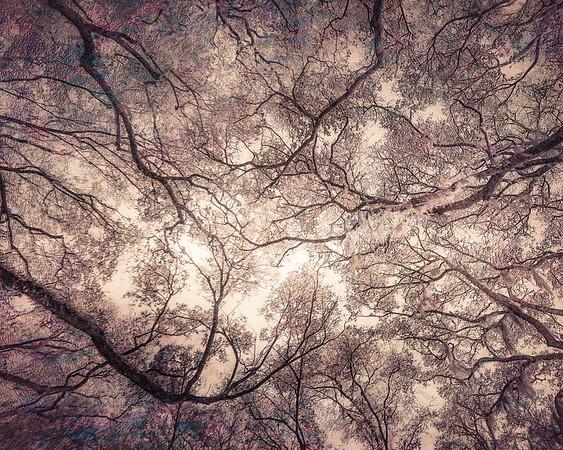 Oak Grove Canopy #13, Dreamy Texture