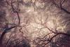Oak Grove Canopy #15, Dreamy Texture