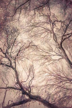 Oak Grove Canopy #12, Dreamy Texture