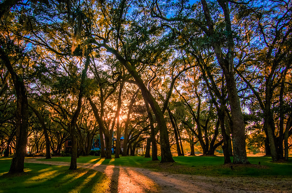 Sunset Through the Oak Grove