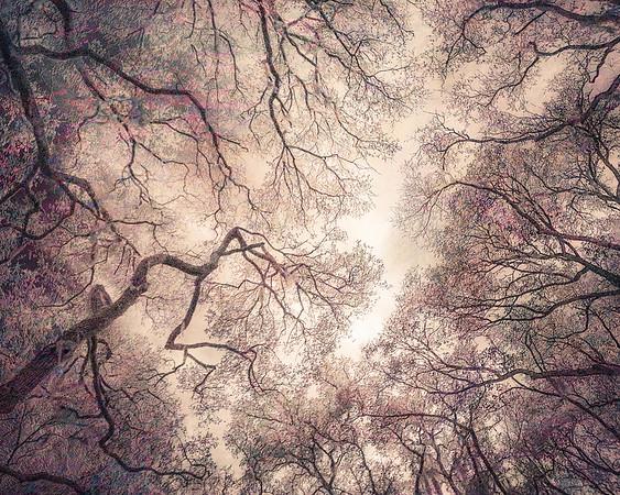 Oak Grove Canopy #10, Dreamy Texture