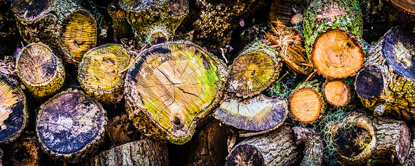 Colorful Wood Pile #1