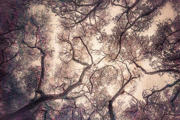 Oak Grove Canopy #4, Dreamy Texture