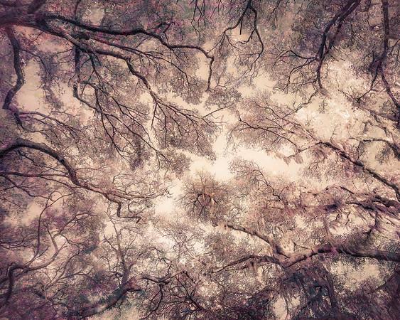 Oak Grove Canopy #14, Dreamy Texture
