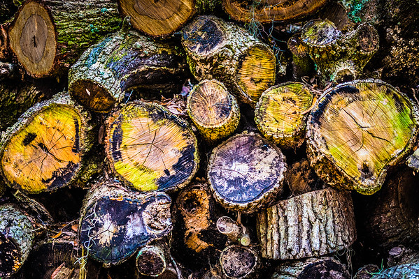 Colorful Wood Pile #2