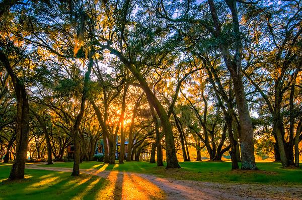 Sunset Through the Oak Grove