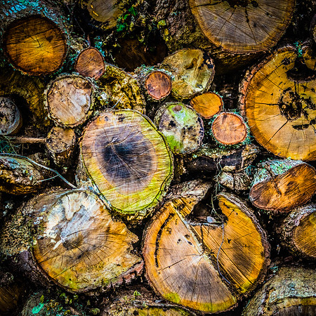 Colorful Wood Pile #3