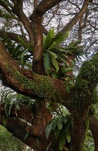 Detail of the rain tree