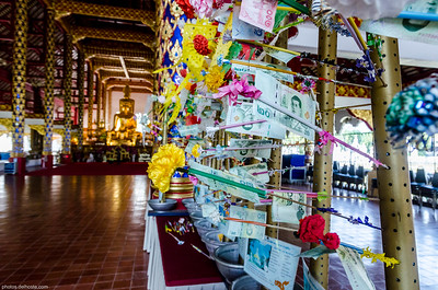 Money Tree at Wat Suan Dok in Chiang Maï
