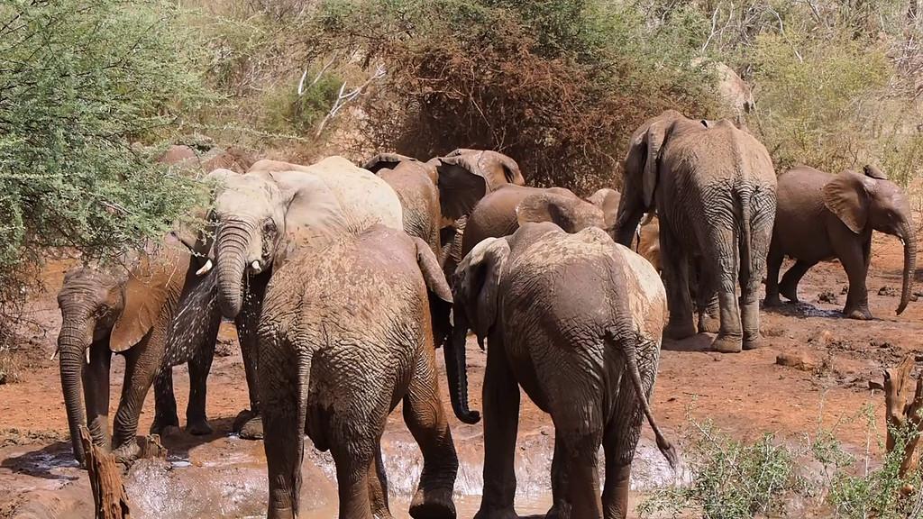 Elephants at the Waterhole - long