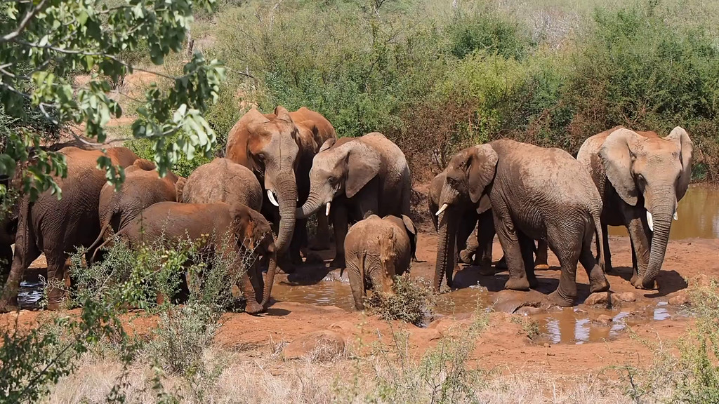 Elephants at the Waterhole - Short