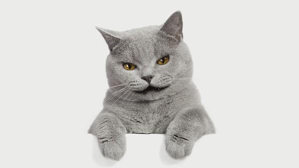 Tuna Cat_mp4