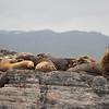 Patagonia_3340