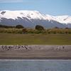 Patagonia_3551