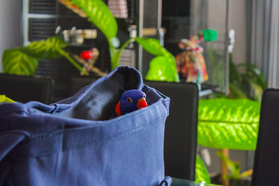 Lorikeet Travel Bag