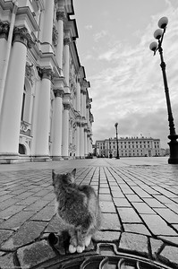 Un chat à Saint-Petersbourg