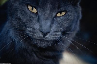 Chat ou Panthère?
