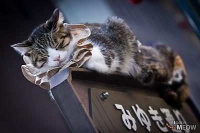 Miyuki Dori Cat