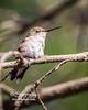 Hummingbird Rest