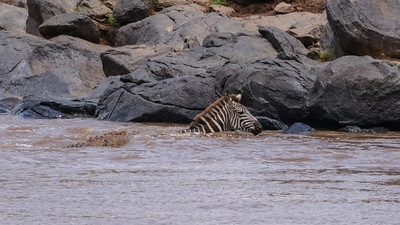 1609_Kenia_Zebra_escape