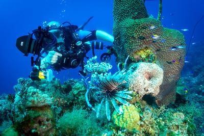 Diver and Lionfish, Bahamas