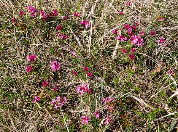 Meadow flowers [Augsburg, Bayern, Deutschland]