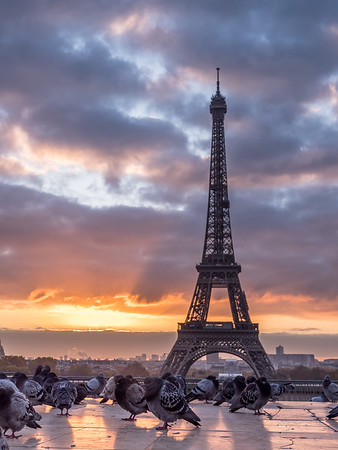 Eiffel Tower Sunrise