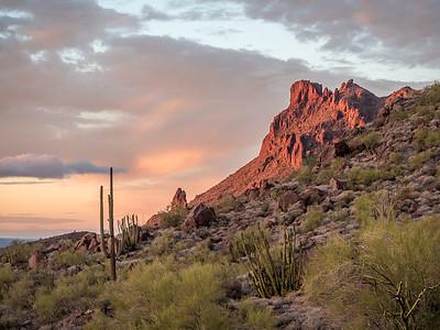 Organ Pipe Cactus National Monument