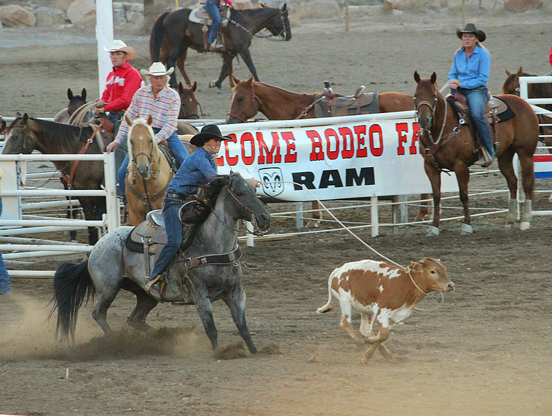 A night at the rodeo.  Cody, Wyoming<br /> This calf doesn't know it yet but this cowgirl has just proved the ladies can rope too!