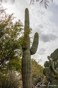 2018-02-13_ArizonaScottsdale_IMG_5607