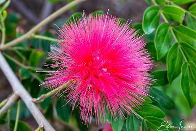 Desert Plant 1