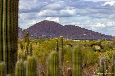Arizona Terrain 1