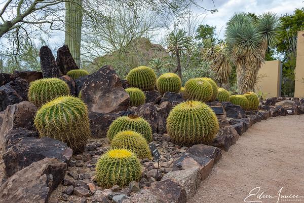 2018-02-13_ArizonaScottsdale_IMG_5639