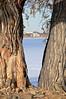 House & Trees - Boyd Lake State Park - Loveland, CO
