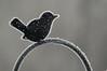 Frosty Bird