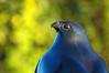 Bird and Autumn Color - Benson Sculpture Garden Morning