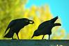Iron Ravens - Autumn Morning - Benson Sculpture Garden